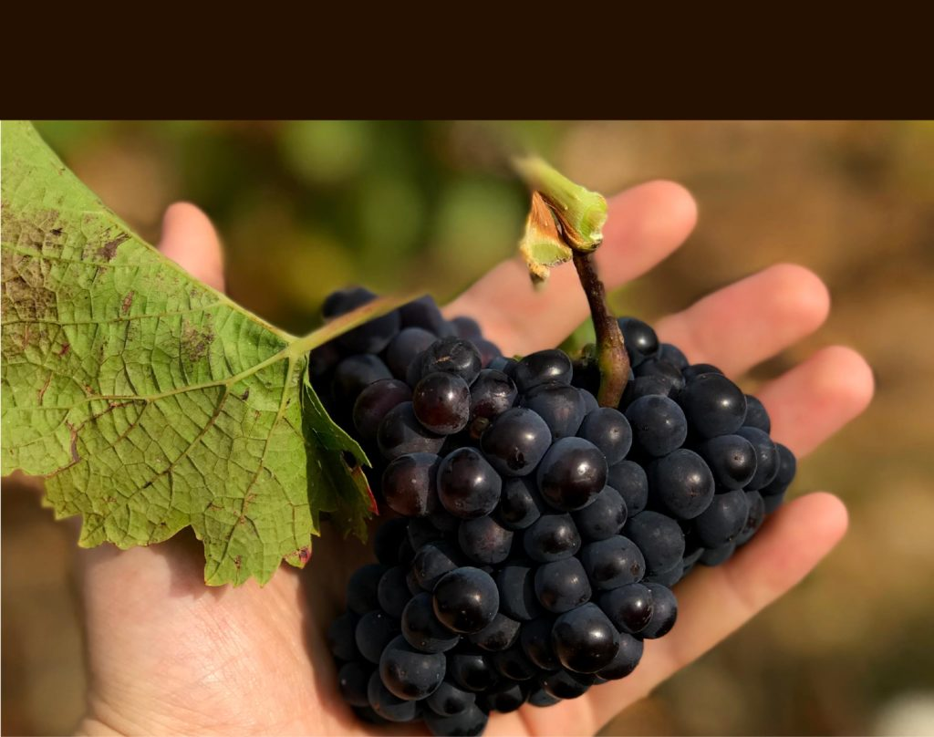 Pinot Noir Parigot